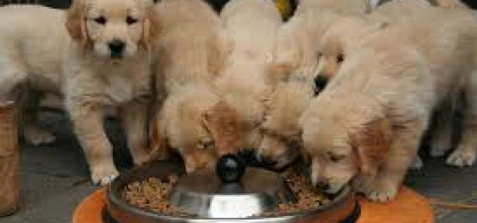 Some essential ingredients for your puppy food