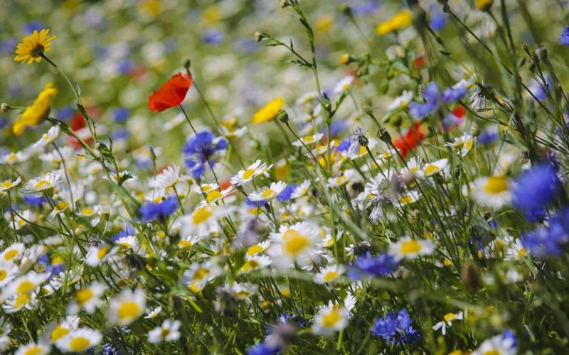 Wild Flowers – the most beautiful ones