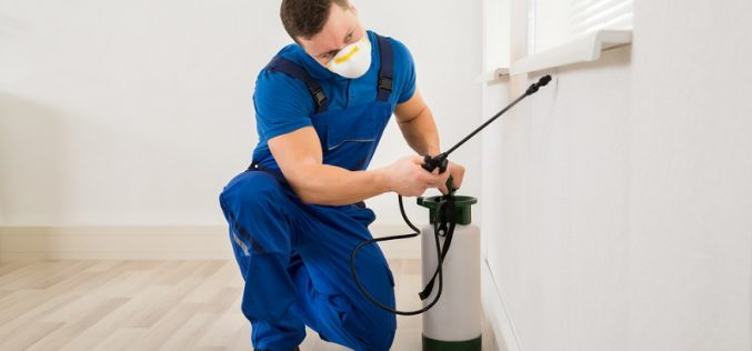 Why hiring a Professional Pest Control Company is a smart decision?