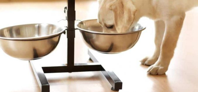 Benefits Of The Metal Bowl For Your Dog's Being And Energy